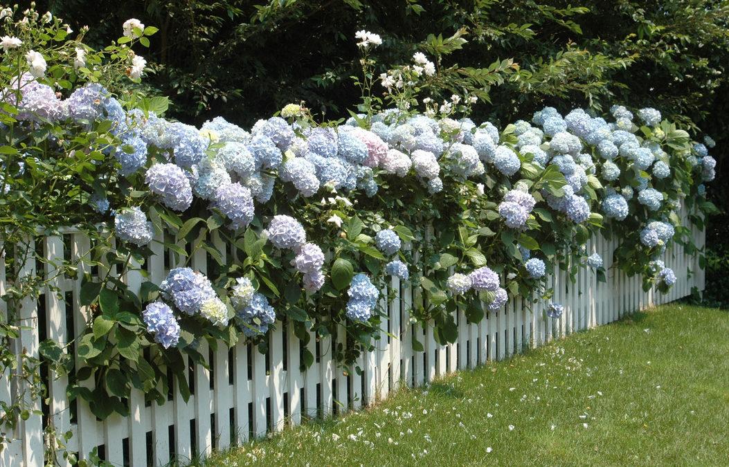 Ideje za savršeno dvorište: Drvena ograda