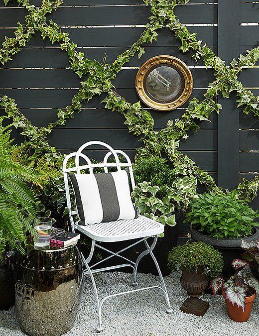 Ideje za savršeno dvorište: Puzavica